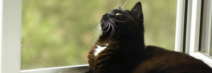 What My Dumb Cat Taught Me about the Gospel