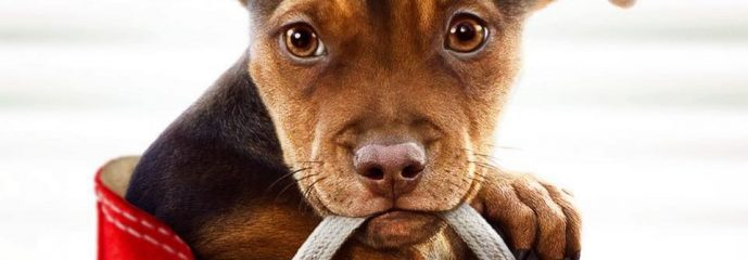 REVIEW: 'A Dog's Way Home' spotlights one of God's great blessings