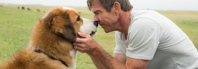 REVIEW: 'A Dog's Journey' is a pet flick wrapped in a reincarnation plot